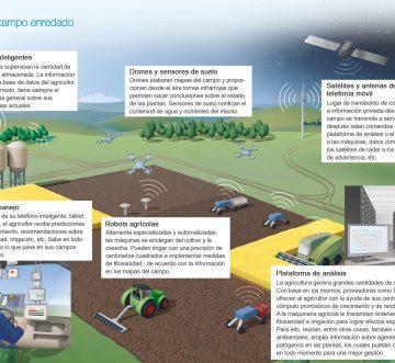 Innovación en el campo con agricultura inteligente
